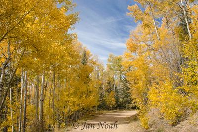 Golden Aspen Trail